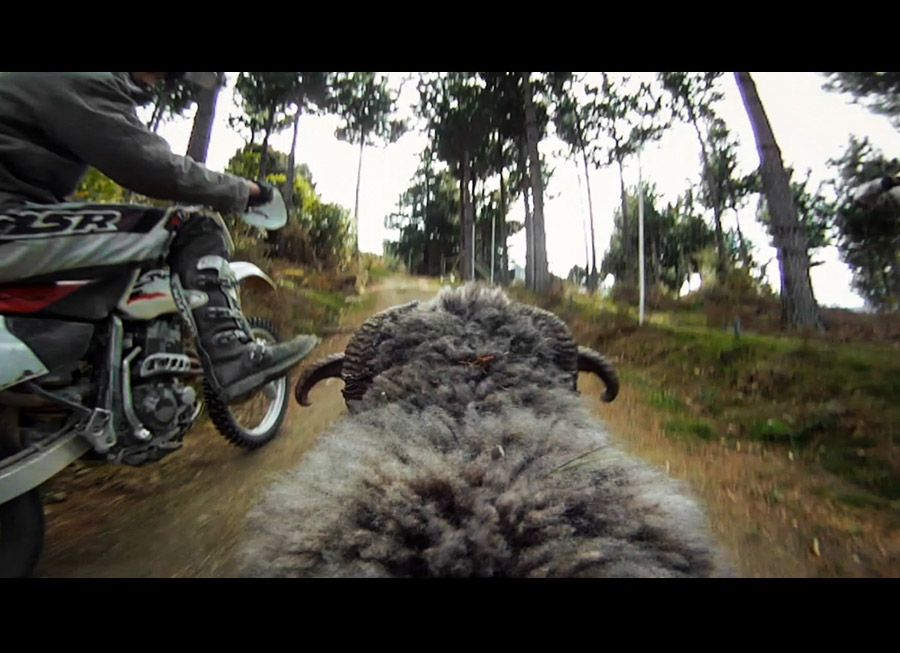 Rambro is an Angry Ram that fervently protects his hill from dirt bikers