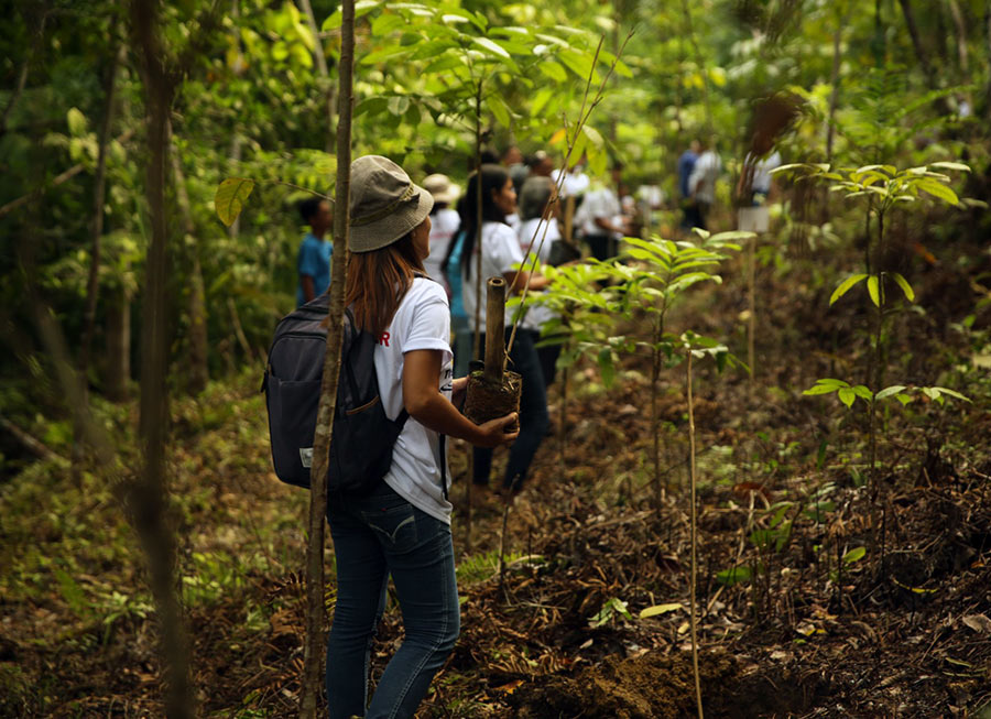 Petron celebrates 85th anniversary by reforesting 100 hectares of land